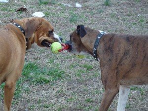 Layla and Gracie play Tug of War