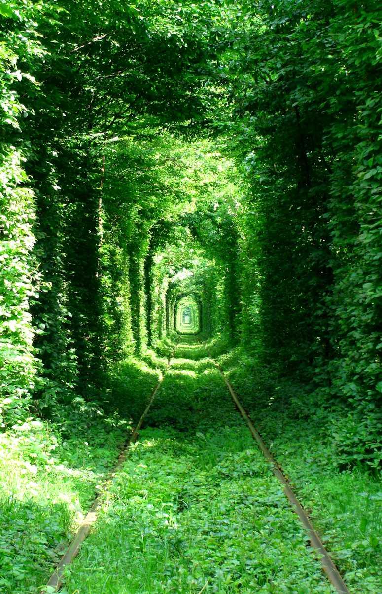 Tunnel of Love i Ukraina - en vacker tågtunnel omgiven av löv.