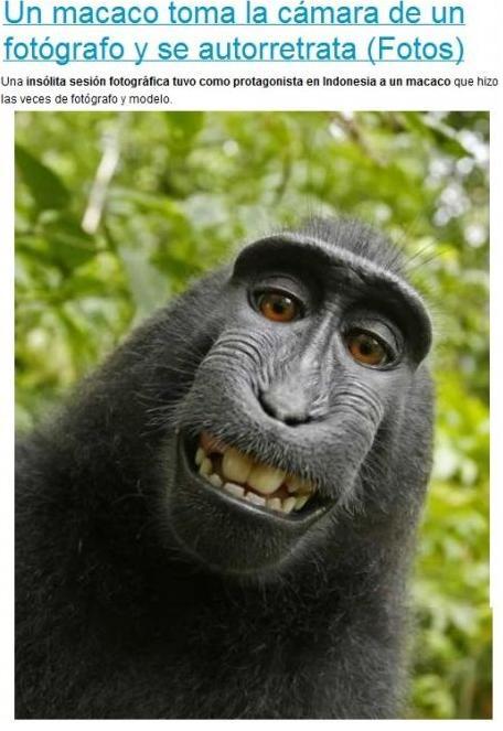 ¿A que jode que un mono salga más guapo en foto que muchos de vosotros?