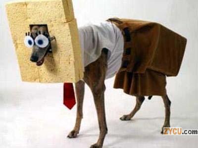 El perro del Sr.Grifter