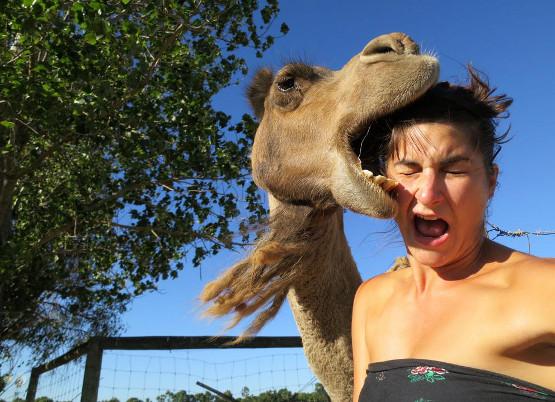 ¡Por favot, no den de comer a los animales!
