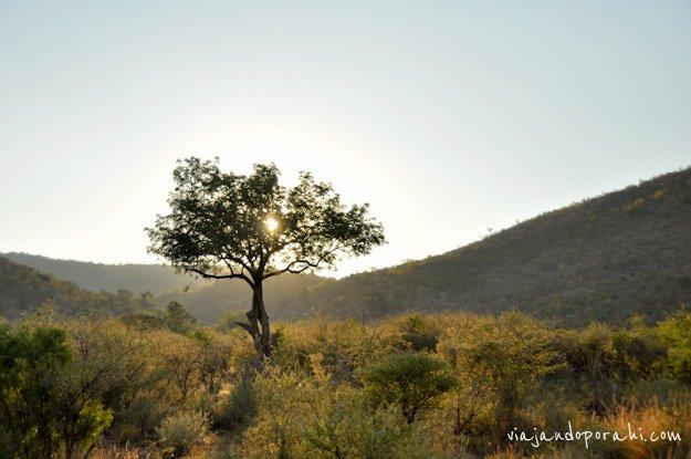 safari-sudafrica-6