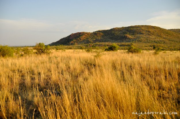 safari-sudafrica-8