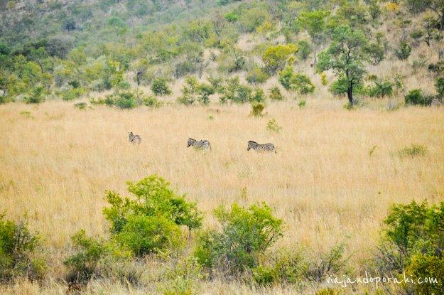 safari-sudafrica-12