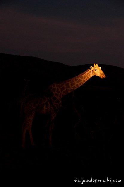 safari-sudafrica-25