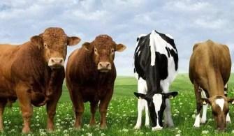 hayvancilik-hibe-kredi