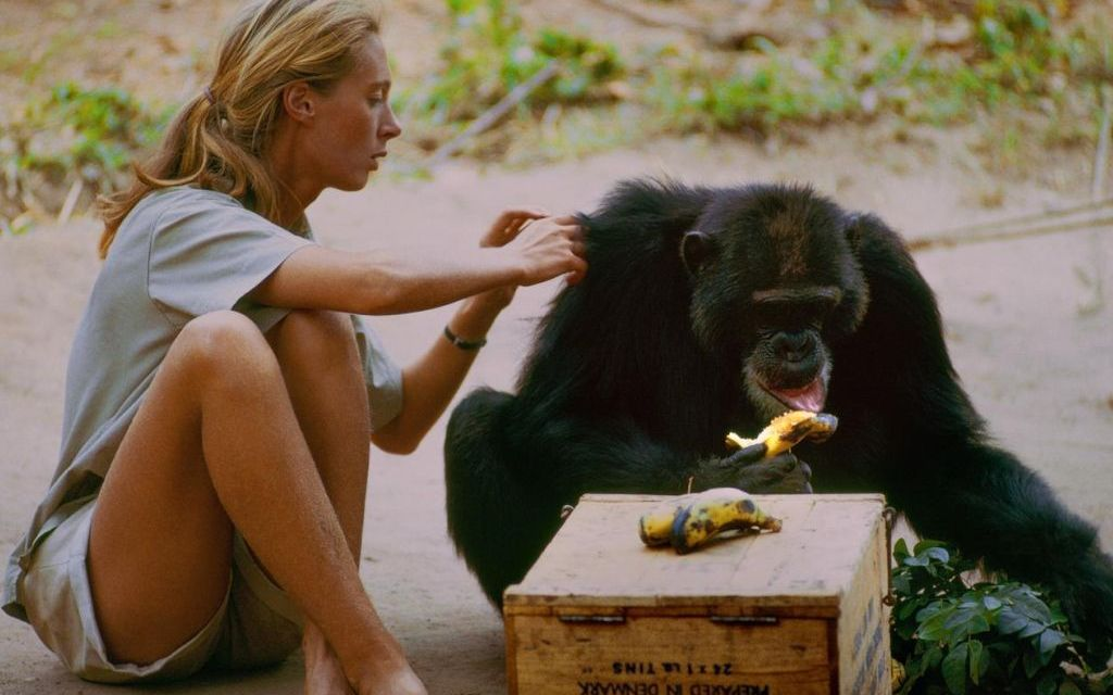 <em>JANE</em>   Documentary finds beauty, love and truth in the wild
