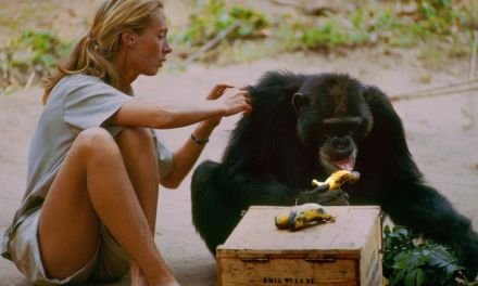 <em>JANE</em> | Documentary finds beauty, love and truth in the wild
