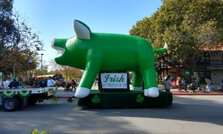 RISING AGAIN | St. Patrick's Day Pig returns from the dead