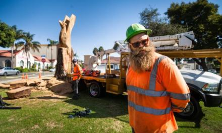 PHOENIX RISING | Ventura's Plaza Park tree shrouded in mystery