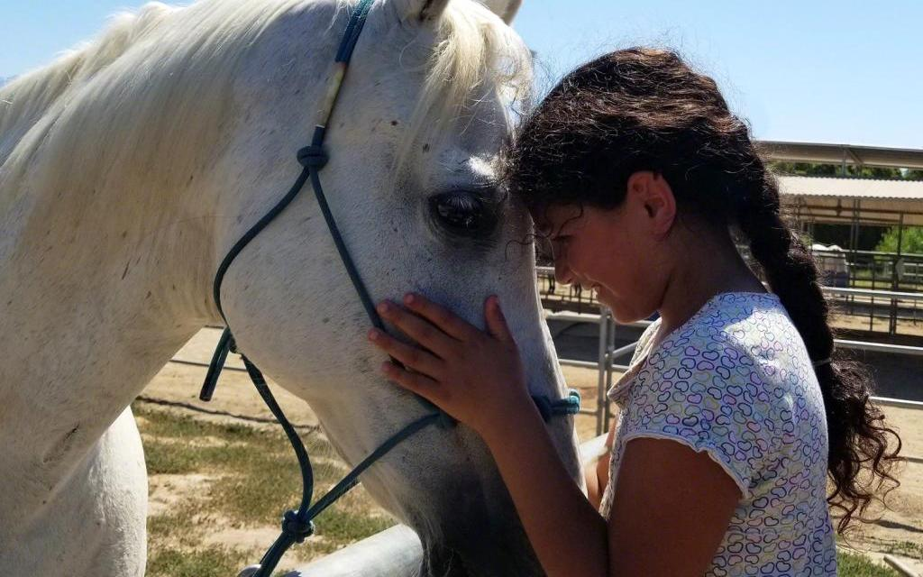WHERE THE LOVE IS |Local orgs promote healing through bonds between man and animal