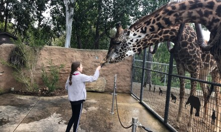 KINDNESS CORNER | Ventura girl becomes San Diego zookeeper for a day