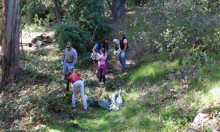 Green coalition clears way for creek restoration