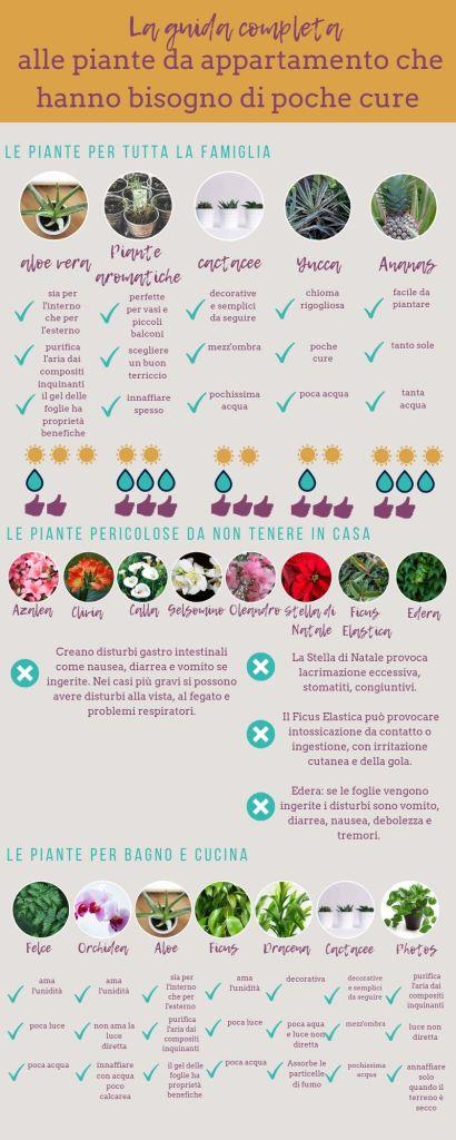 Infografica delle piante da appartamento che hanno bisogno di poche cure