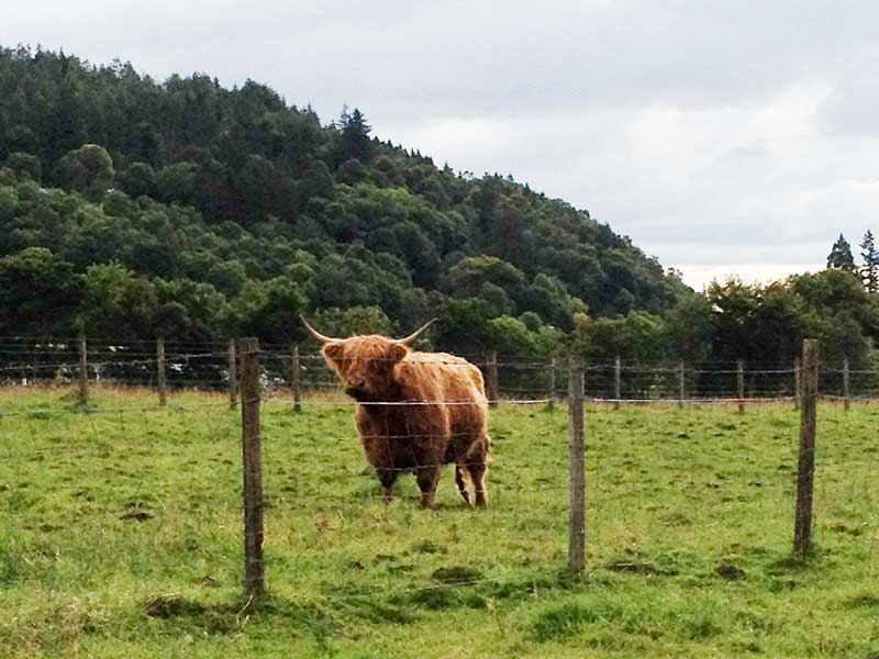 our early morning neighbour at Trossachs Mill