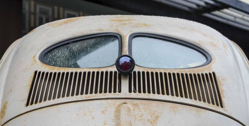 plenty of cool early split window beetles to seen