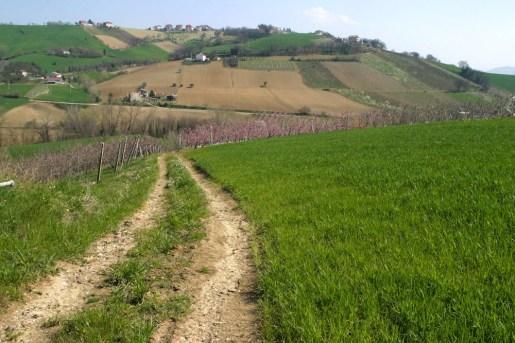 fattoria-ascoli4