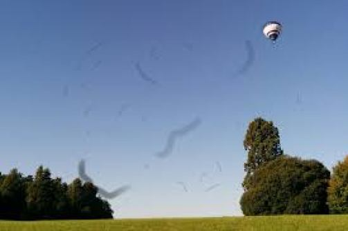 mosche volanti miodesopsie corpi mobili