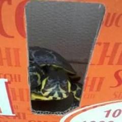 Una tartaruga a Venezia
