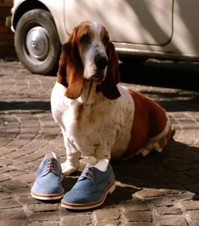 03 - scarpa-derby-uomo-azzurra-fera-libens-con-basset-hound.jpg