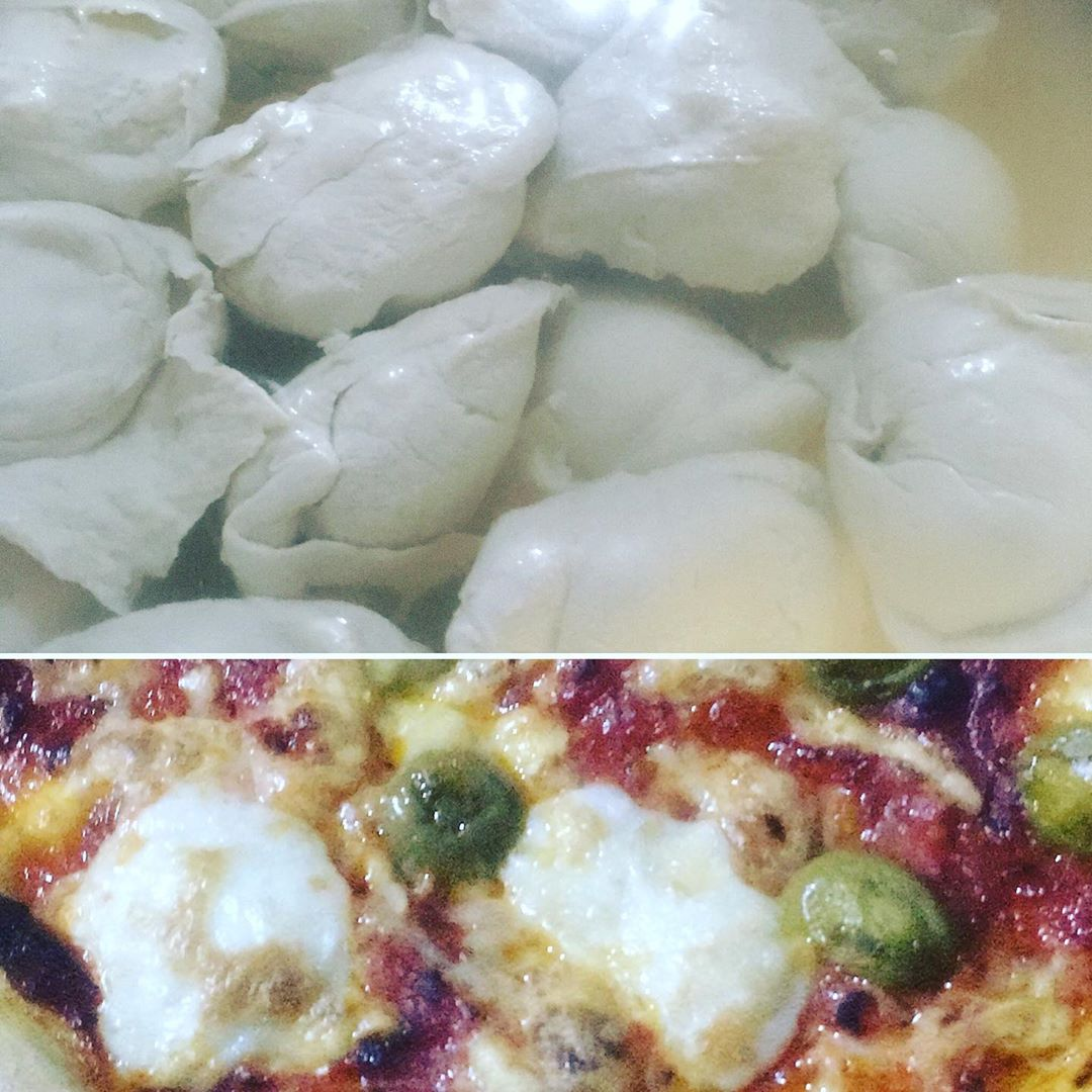 melty vegan mozzarella made from sunflower seeds display image  d93a9e98