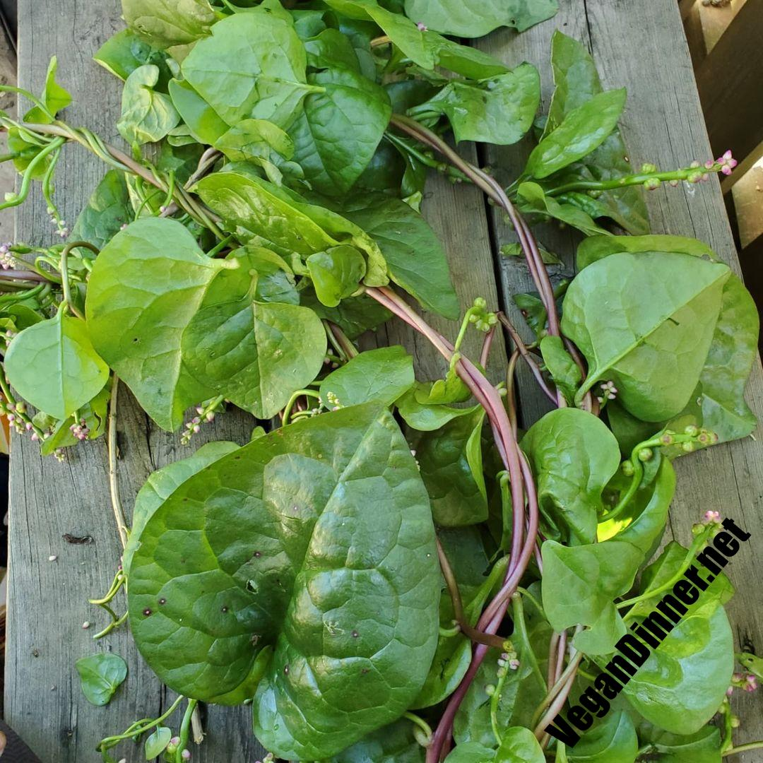harvested some spinach from the garden made vegan saag pane multip img aac