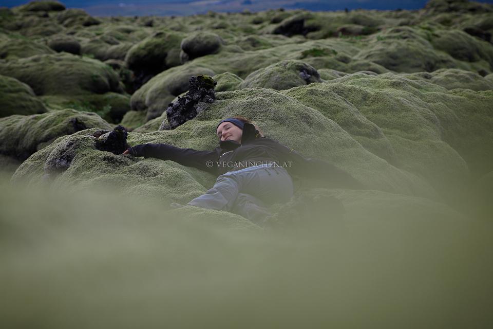 veganinchen im Eldhraun, Island