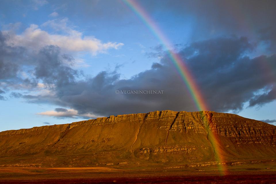 Regenbogen Island veganinchen