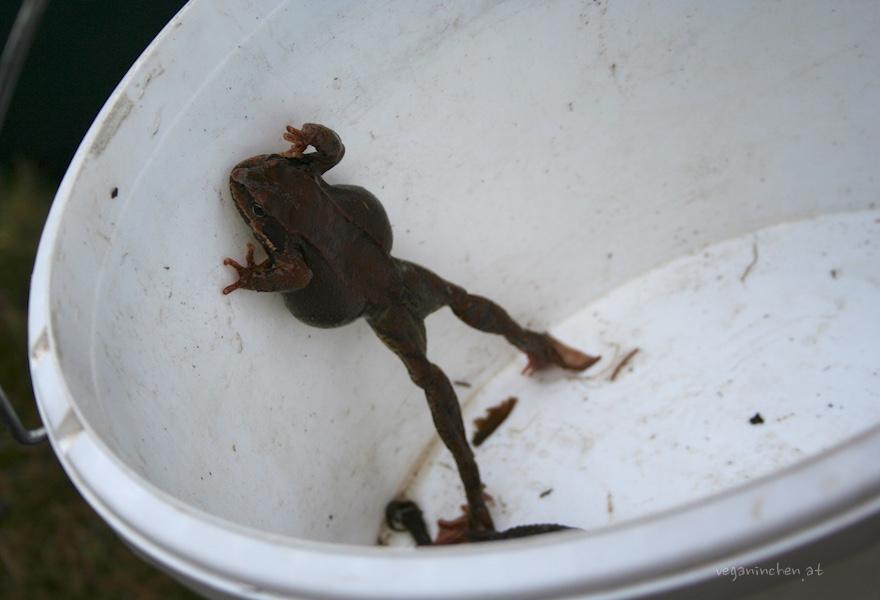 amphibien sellrain tirol