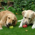 Healthy Fruits That You Can Add To Your Dogs' Vegan Meal Plan