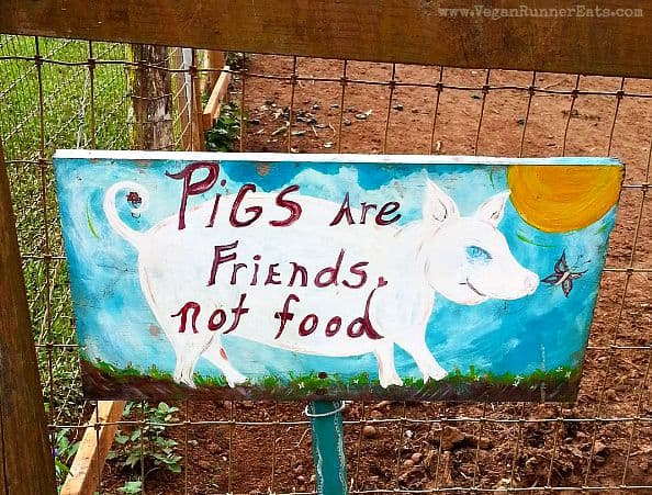 Pigs are friends sign at Leilani Farm Sanctuary, Maui, Hawaii