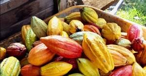 Vegan food on the Big Island of Hawaii