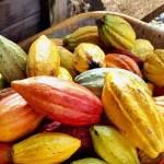 Vegan Travel on the Big Island of Hawaii: Restaurants, Farm Tours and Beyond