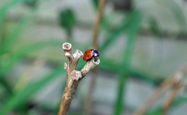 Ladybug/Slug Break