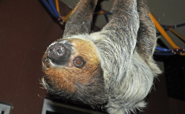 <b>I 💗 Sloths: My Sloth Sleepover</b> at Zoological Wildlife Conservation Center and the Sloth Captive Husbandry Research Center
