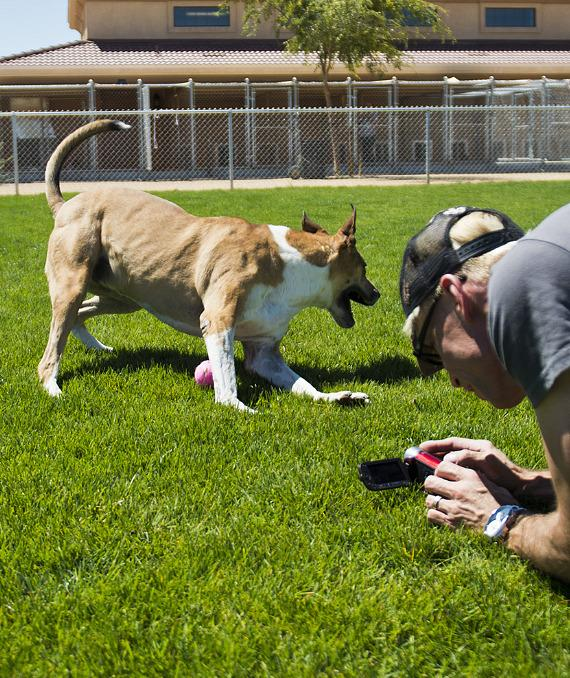 Murray shoots a video of one of the shelter's dogs playing in the yard.