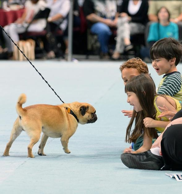 The Animal Foundation to Host 15th Annual Best in Show Sunday, April 22, 2018