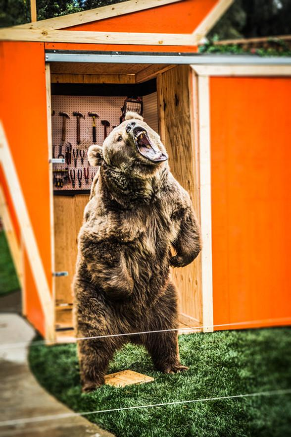 Murray Performs New Illusion with Grizzly Bear on Hallmarks Home and Family TV Show