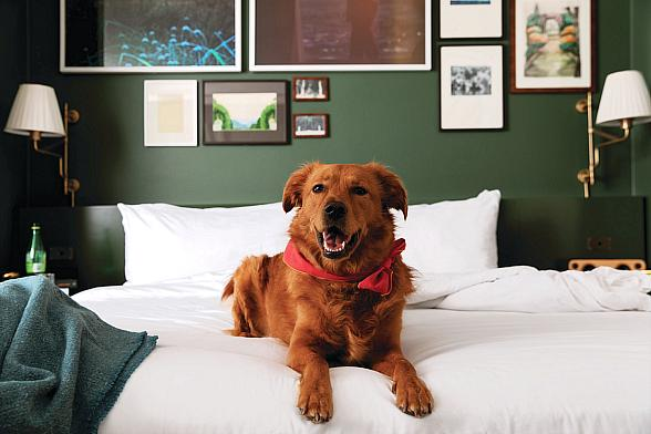 Pooches and Parents Will Be Bow-WOWed with MGM Resorts New Dog Program