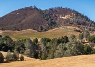 This is the Mt. Harlan Chardonnay vineyard.
