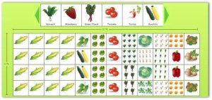 Planning a Garden Layout with Free Software and Veggie