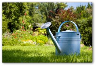 painted metal watering can in a garden