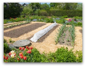 Mulching A Vegetable Garden Helps With Weeds And Water