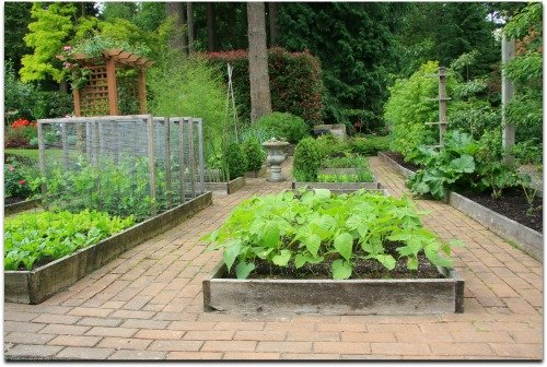 Raised Vegetable Garden Layout