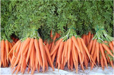 harvested carrot harvested carrot