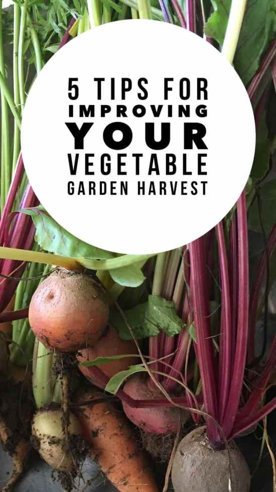 5 tips for a super successful vegetable garden this year