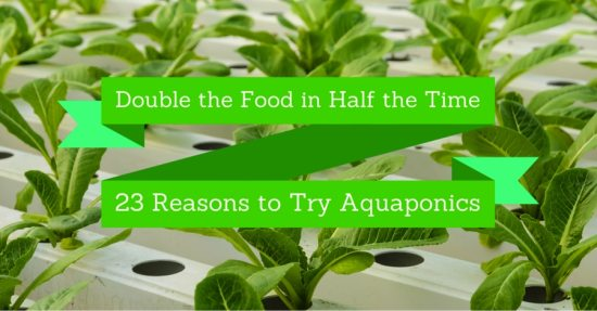 23 Reasons to Try Aquaponics