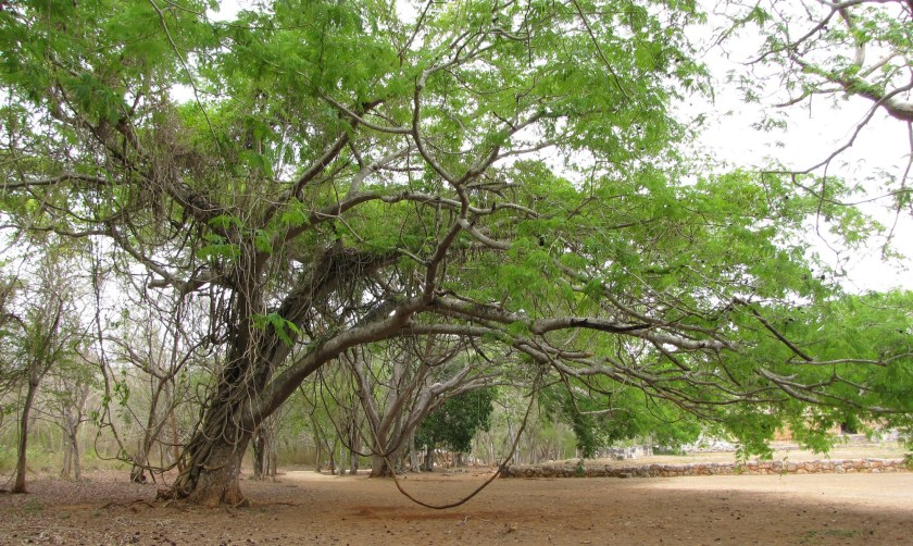 Labna_trees_by_RM