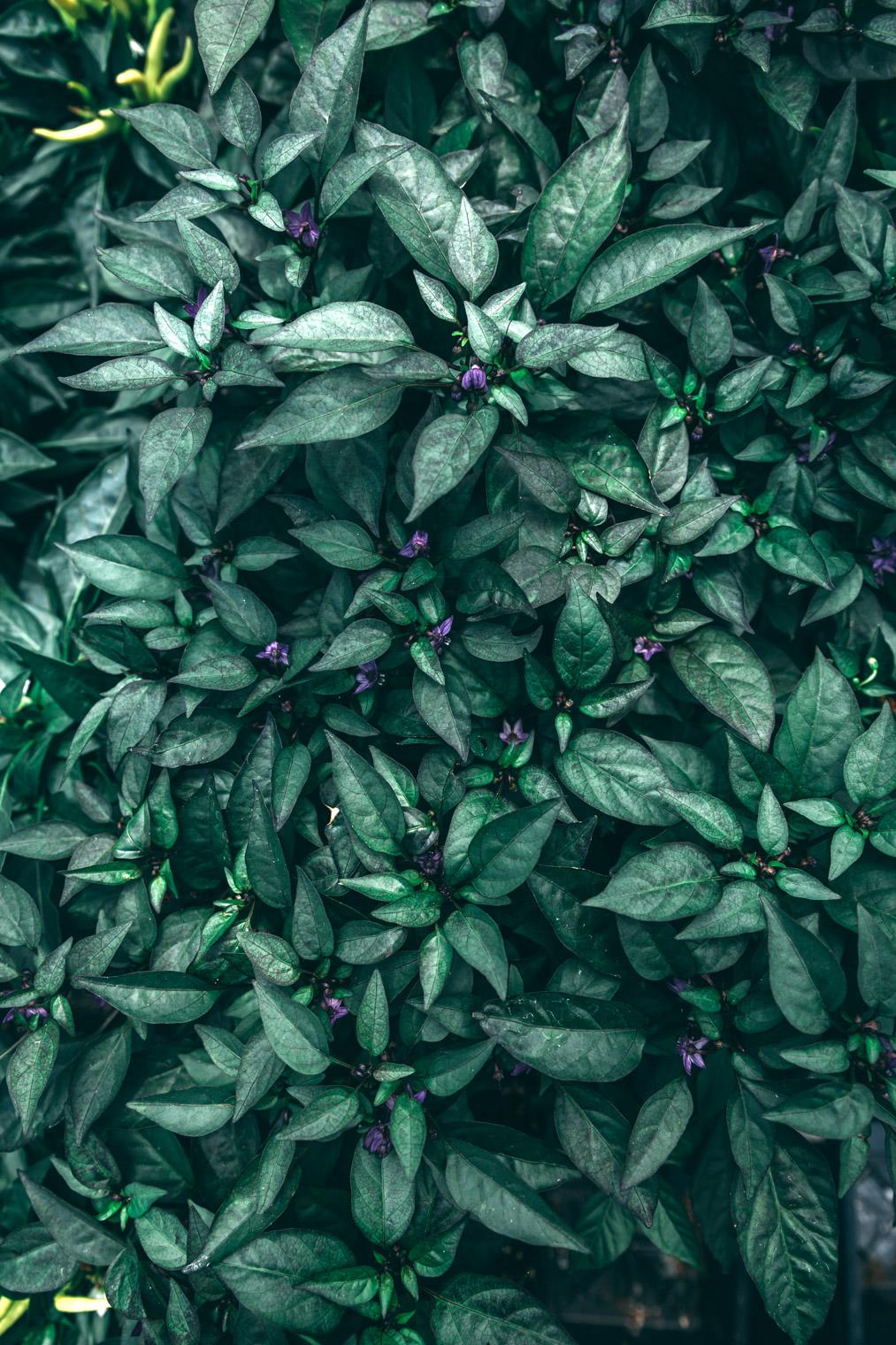 My Tips & Tricks For Planting an Edible Garden