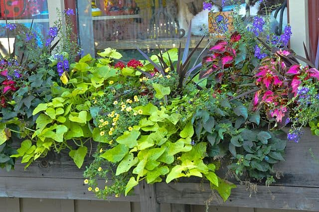 By Valerie Everett from Logansport, USA (Planter box) [CC-BY-SA-2.0 (http://creativecommons.org/licenses/by-sa/2.0)], via Wikimedia Commons